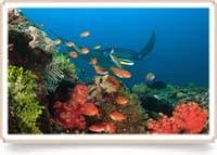 Basiscursus duikgeneeskunde deel 1, Flores 2017
