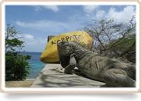 Basiscursus duikgeneeskunde deel 2 Bonaire 2020