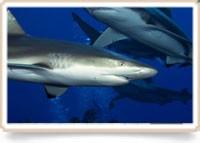 Gevaarlijk onderwaterleven, week 1